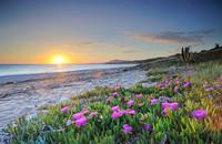 Sea_Coast_Sunrises_and_458655