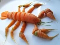 le homard des pauvres