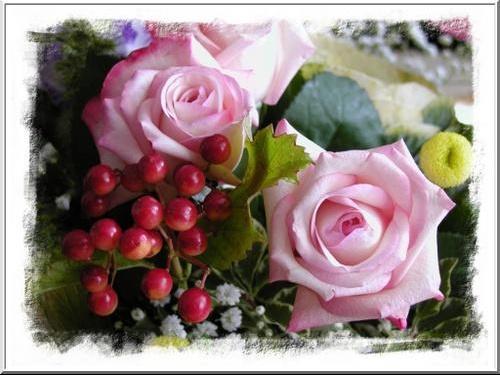 deux-rose-roses1024
