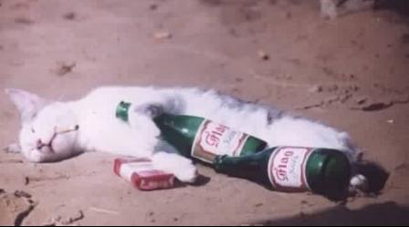 chat-ivre