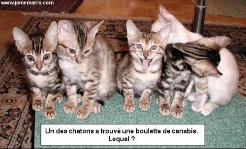 chat_boulette_shit