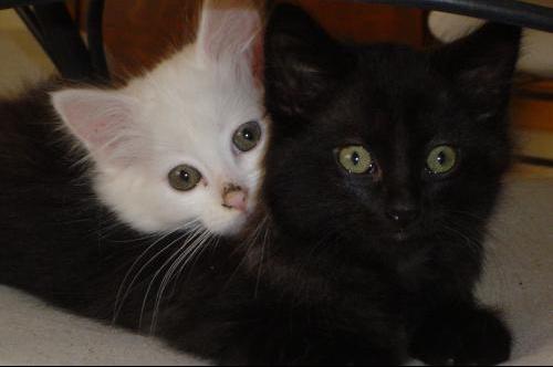 Poumba et Timon (6)1