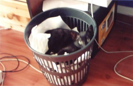plume dort dans la poubelle