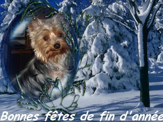 snow_and_frame_1dhjfhlbl