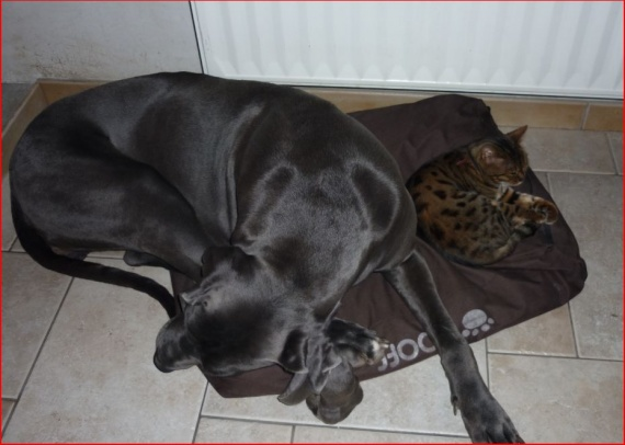 comme chien et chat ... :o)