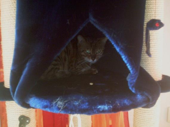 Lilly-aux-yeux-d'émeraudes
