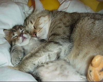 KittenPictures37