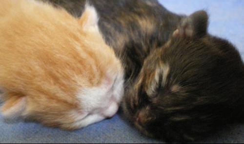 les chatons et doudou 010