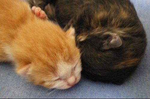 les chatons et doudou 012