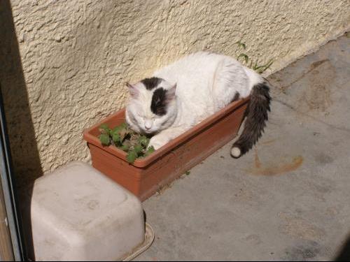 boogie plante
