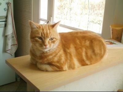 cachou-chat-roux-etes-fier-nom-animal_15868