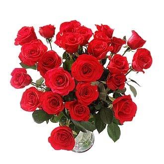 roses-long-stem-red
