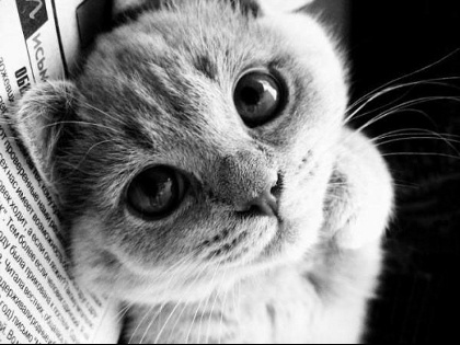cute-and-lovely-cat-02