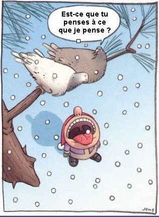 pigeon-neige