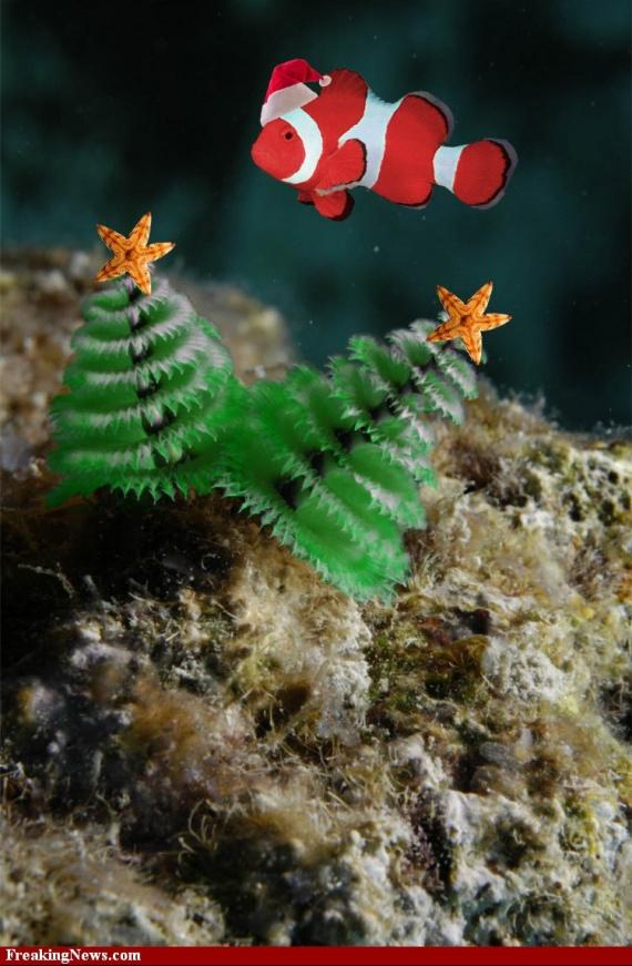 Christmas-Tree-Worms--35107