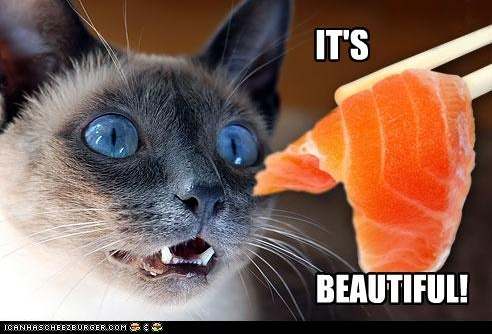 funny-pictures-cat-likes-salmon