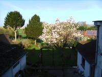 Magnolia qui commence à fleurir, c'est le printemps !