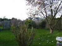 Les fleurs du magnolia sont bien ouvertes