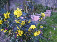 Je ne connais pas le nom mais ça embaume tout le jardin !