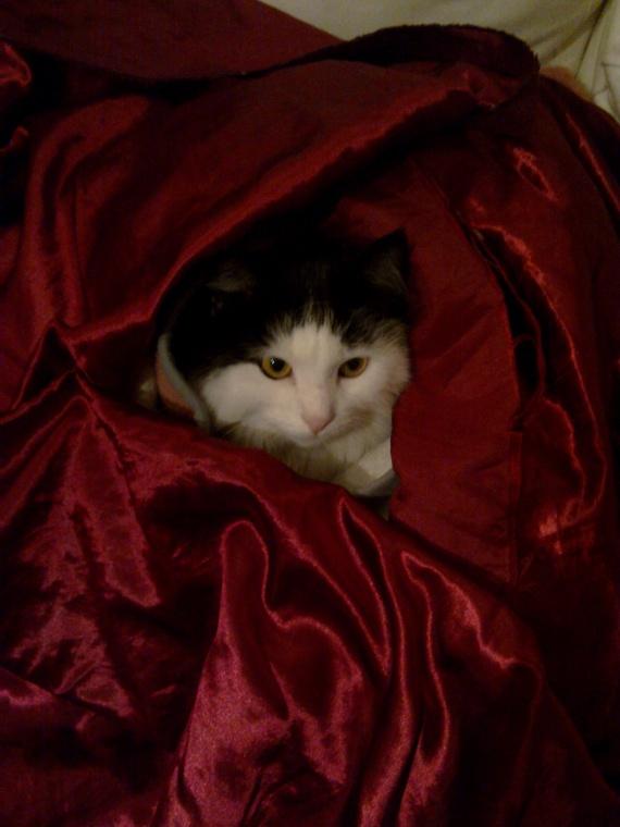 Poilu couverture rouge