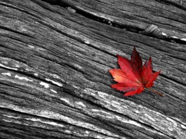 belle-image-divers-rouge-noir-blanc-big