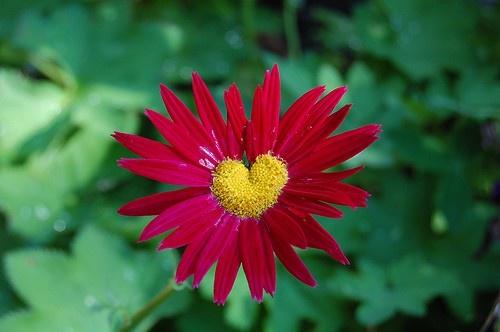 la nature a du coeur (jeu) - Page 2 Natural-hearts-271060471291857843_le69s7pc_f-img