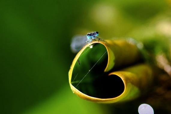 la nature a du coeur (jeu) - Page 2 Natural-hearts-25825397832874118_trifsbfo_f-img