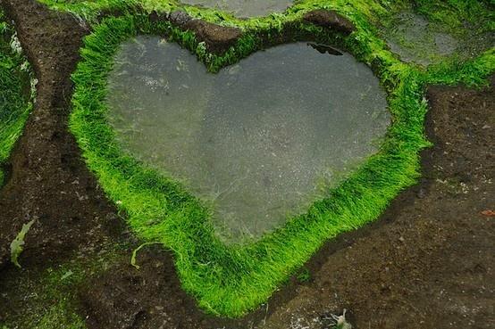 la nature a du coeur (jeu) - Page 3 Natural-hearts-21532904438086177_a1unsb1e_b-img