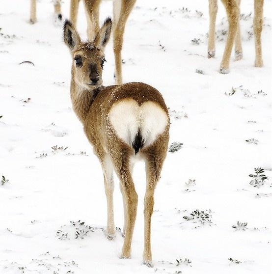 la nature a du coeur (jeu) - Page 2 Natural-hearts-139259813447122957_fw8apdsa_f-img