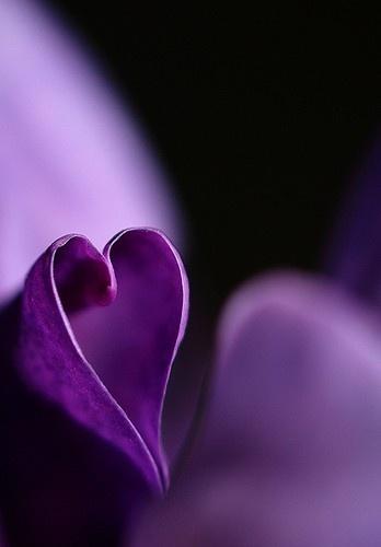 la nature a du coeur (jeu) - Page 2 Natural-hearts-239746380132859770_ohfqzn1b_f-img