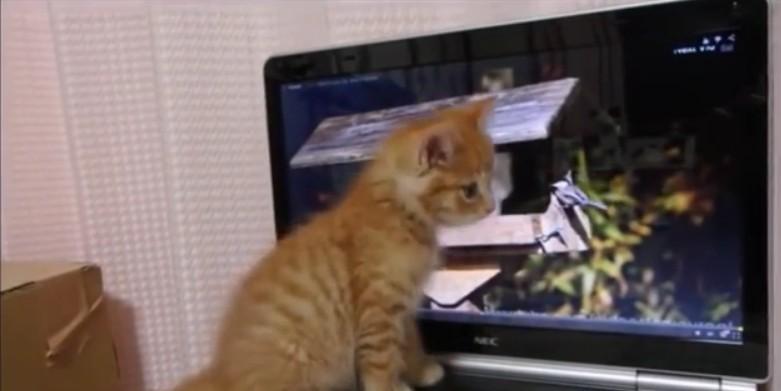 Chaton joue avec les oiseaux virtuels