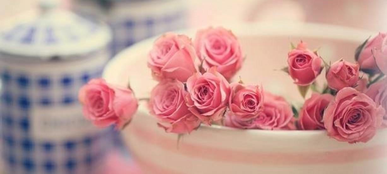 Mon ami la rose