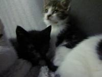 tripotée de chatons...vive les portées sauvages!