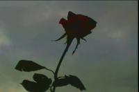 Ernesto Cortazar - Beethoven's Silence - YouTube