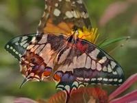 Yanni - Butterfly dance - YouTube