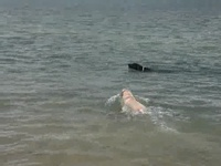 Oscar la honte des labradors en natation !