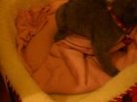 Grizou et sa couverture