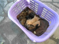MAMINA et ses chatons le 27.05.2012