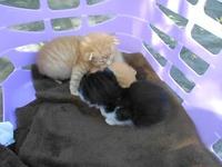 Vidéo des chatons le 27.05.2012