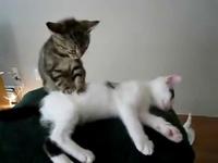 un chaton massant un autre chaton.trop mignon!!! - YouTube