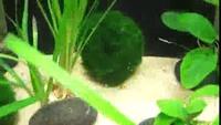 Mes plantes qui font des bulles :D