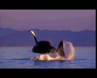 baleines nature