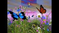 Annita Frisina - Farfalle