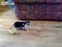 Kitten Vs Lizards