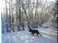 toutous et la neige