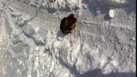 Tequilla dans la neige