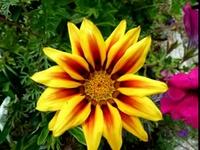 Petite balade fleurie