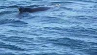 Maman baleine et sa fille