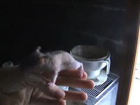 2008 11 09 - skin head