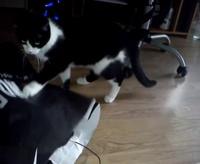 Video Swiff' et Yoshi